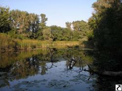 Природа як сукупність обєктивних умов